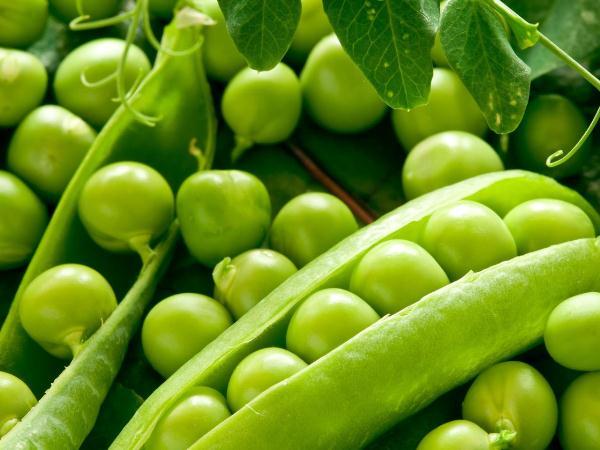 Польза зеленого гороха