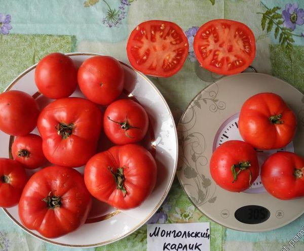 Средний вес плодов сорта - 200 грамм