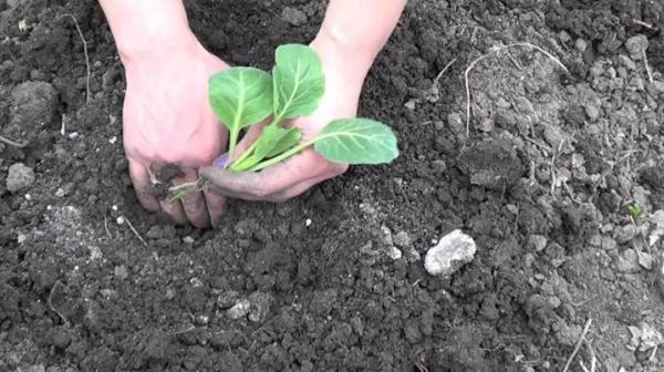 Овощи сажаем в тени