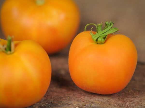 Гибридный сорт томата Персик