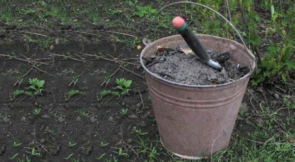 Удобрение тыквы в открытом грунте золой