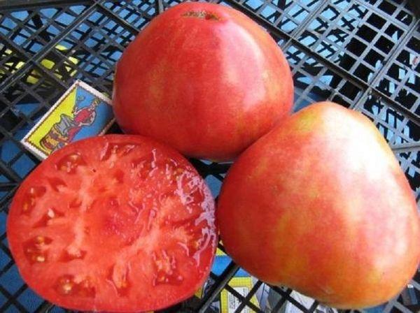 Вес плодов сорта колеблется от 250 до 900 грамм