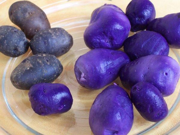 Помимо антиоксидантов в фиолетовых клубнях с необычной окраской есть большое количество витамина С