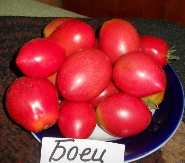 Томат сорта Боец имеет плоды весом 80-180 грамм