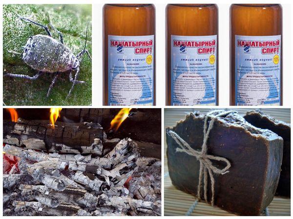 Защита капусты от болезней и вредителей