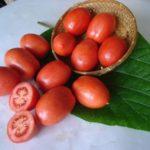 Самые популярные сорта помидор