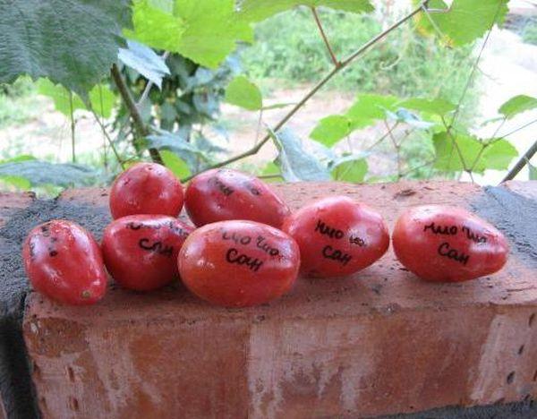 Вес плодов томата - около 40 грамм