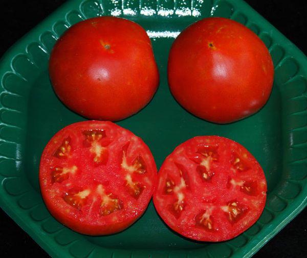 Плоды Ультраскороспелого поспевают до того, как распространится фитофтора