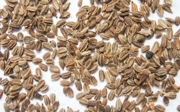При постоянном применении удобрений свои семена и магазинные необходим смешать