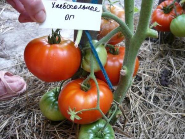 Среднеспелый томат сорт Хлебосольный