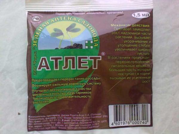 Для предотвращения вытягивания сеянцев необходимо использовать препарат Атлет
