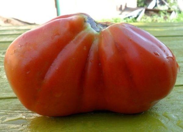 Плоды сорта крупные - около 250-350 грамм каждый