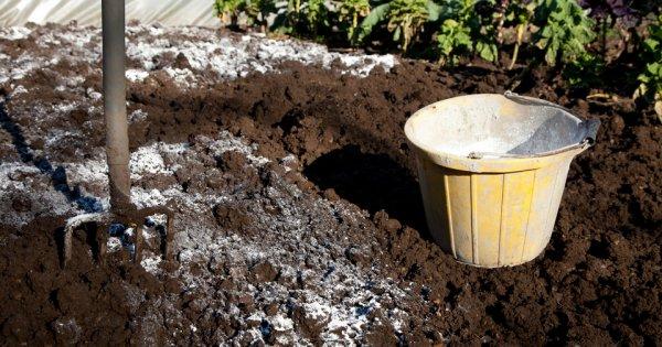 Требования к почве для посадки и правила посева помидор