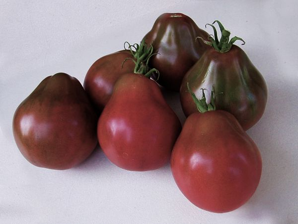 Средний вес плодов составляет 120 грамм