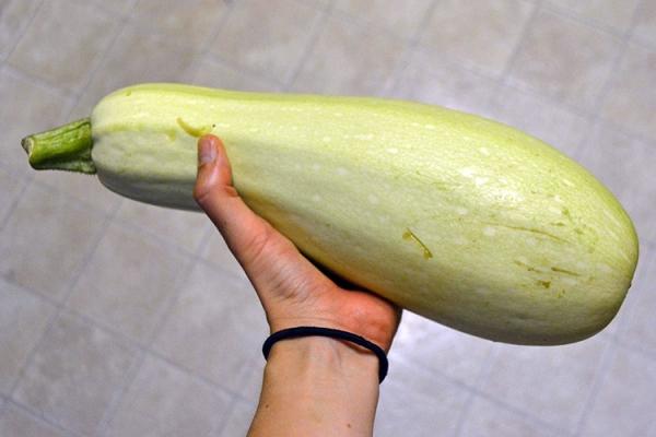 Растение стелющееся, неприхотливо в уходе, в сыром виде плоды не употребляются