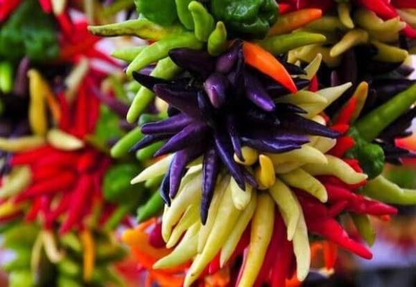 Перец декоративный любим многими за его оригинальный вид и простоту выращивания