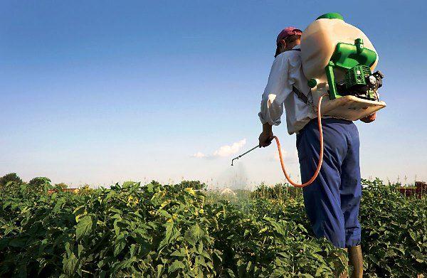 Наносить средство можно путем распыления или полива растения