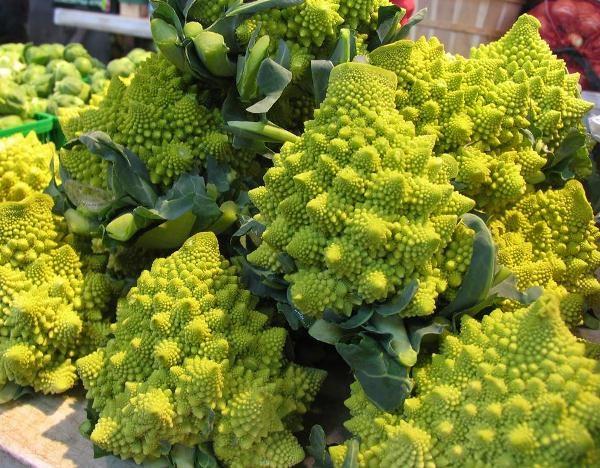 Основной критерий спелости капусты Романеско – сформированные крупные соцветия-звезды