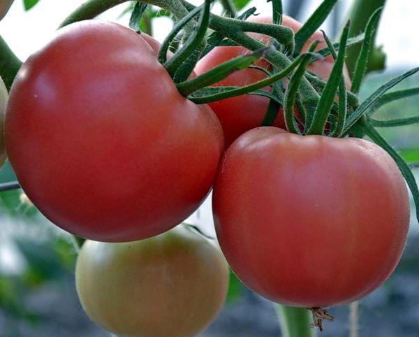 Средний вес плодов сорта составляет 80-200 грамм