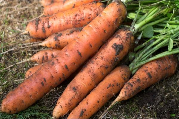 Плюсы сорта: высокая урожайность, устойчивость к растрескиванию, долгое хранение