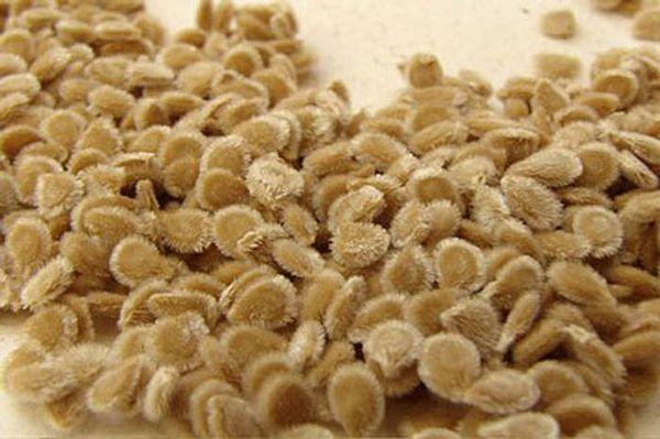Качественный семенной материал - одно из условий хорошего урожая