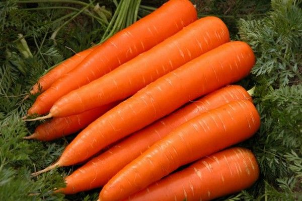 Правильное выращивание моркови