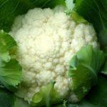 Описание сортов ранней цветной капусты