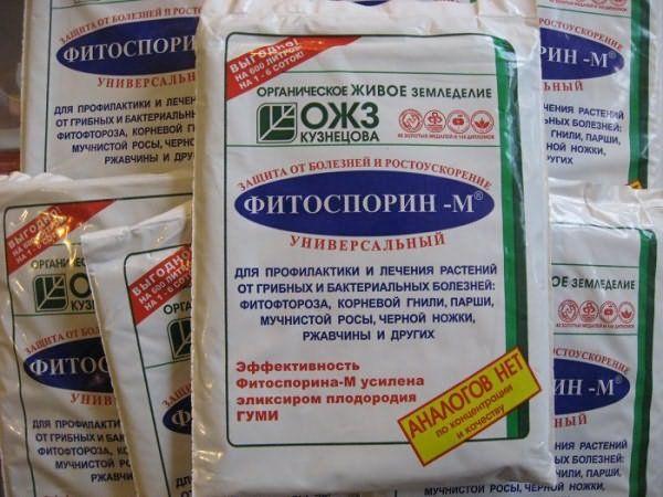 Фитоспорин М применяется для борьбы с фитофторой на картофеле