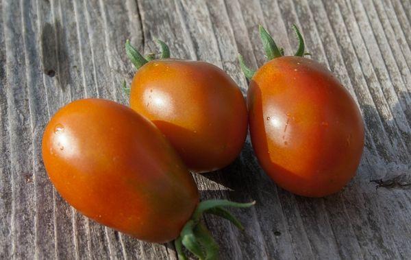 Описание и характеристика томата черный мавр