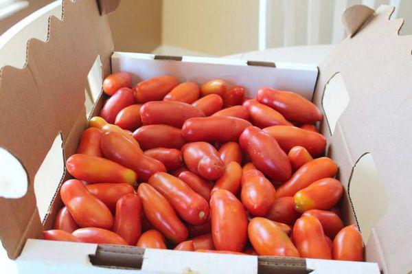 Хорошая транспортабельность и лежкость - достоинства Французского гроздевого томата