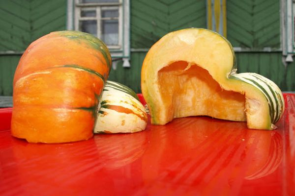 Плоды Турецкого тюрбана съедобны, но безвкусны