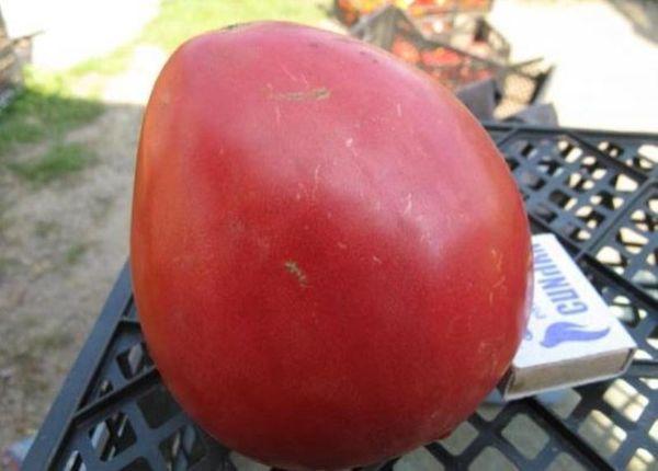 Плоды крупные, средний вес 350-800 грамм