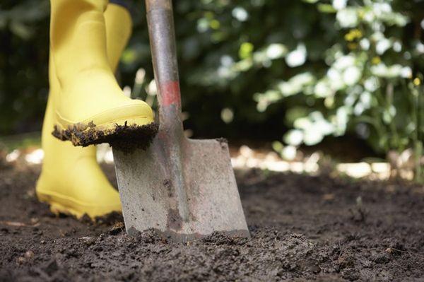 Если почва глинистая - грядку нужно перекопать с осени