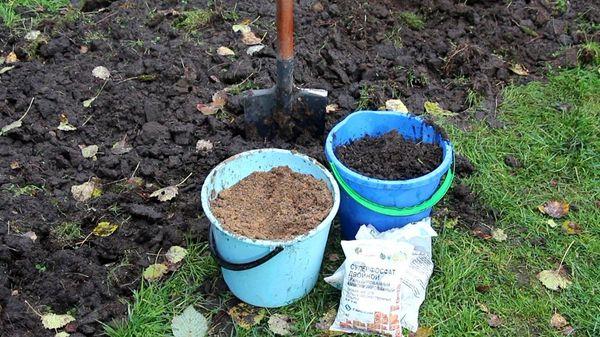 При перекапывании удобрение вносится на глубину 20-30 см