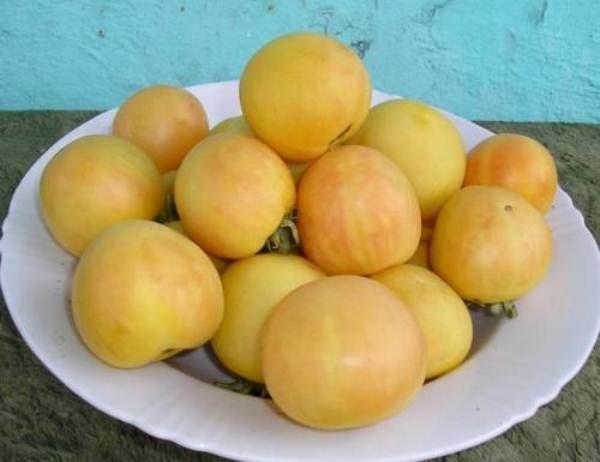 Сбор урожая томата Персик начинают в конце июня