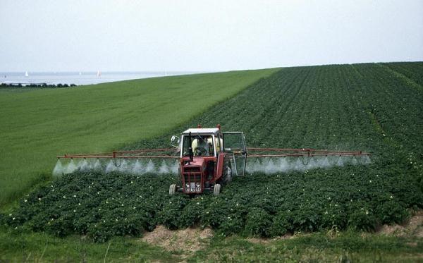 Внесение гербицидов по картофелю на поле