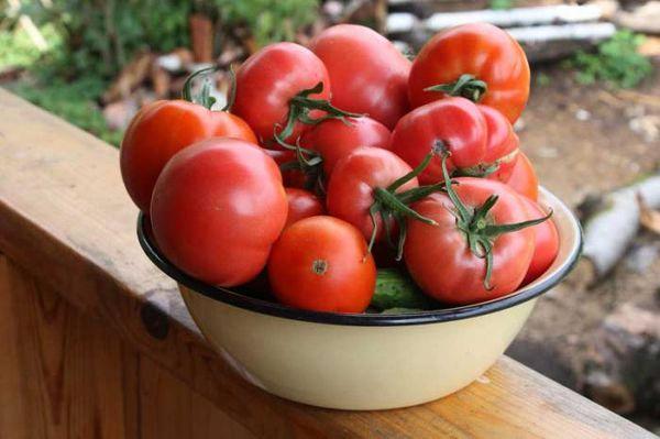 Сбор урожая Ажура необходимо завершить до похолоданий