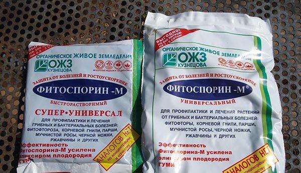 Для профилактики заболеваний можно использовать препарат Фитоспорин