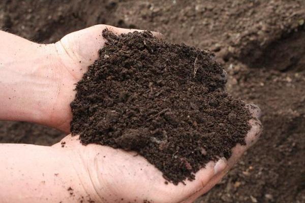 Требования к почве для посадки