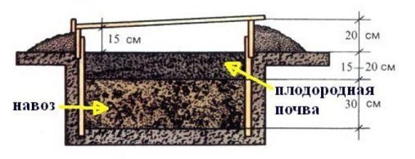 Схема создания биологического отопления парника с навозной ямой