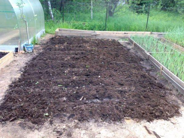 Картофель является очень светолюбивым растением, и участок для него должен быть солнечным, а также, по возможности, защищенным от сквозняков