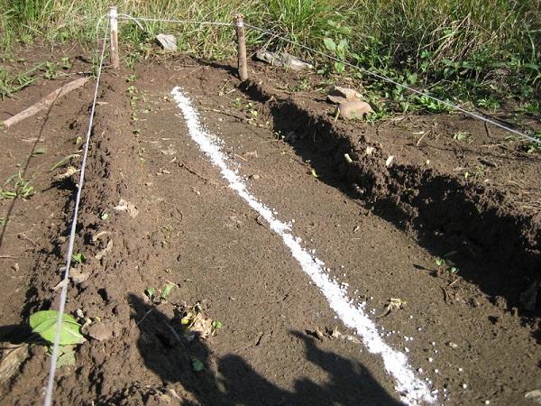 Чем подкормить редис для хорошего урожая