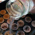 Торфяные таблетки в контейнере заливаются водой