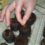 После разбухания таблеток в них размещаются семена