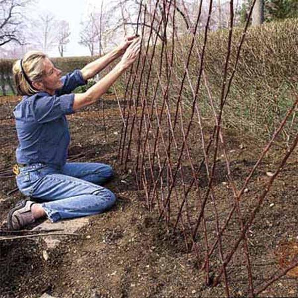 Каркас из ивовых плетей для выращивания огурца