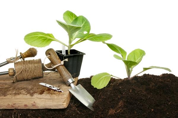 Сроки посадки овощной культуры на рассаду