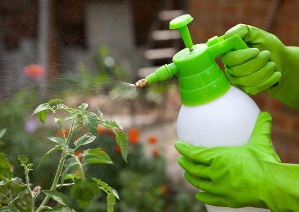 Манипуляции с раствором Эпина и последующая обработка растений должны проводиться с использованием средств индивидуальной защиты