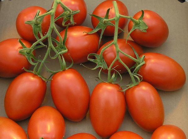 Вес плодов помидор Рома - 60-90 грамм