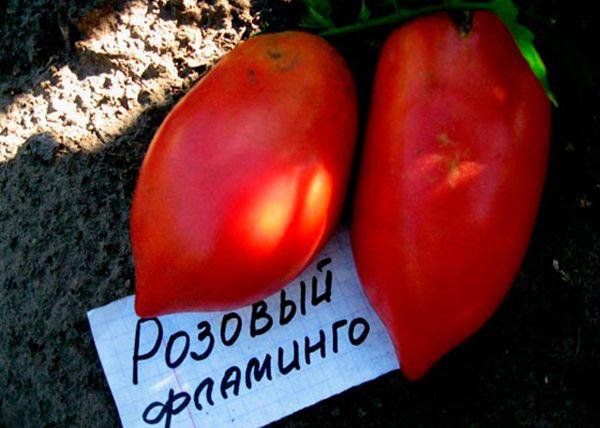 Средний вес плодов сорта составляет 200-400 грамм