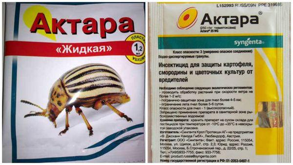 Для профилактики появления вредителей можно использовать средство Актара
